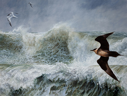 Arctic Skua and Sandwich terns, acrylic